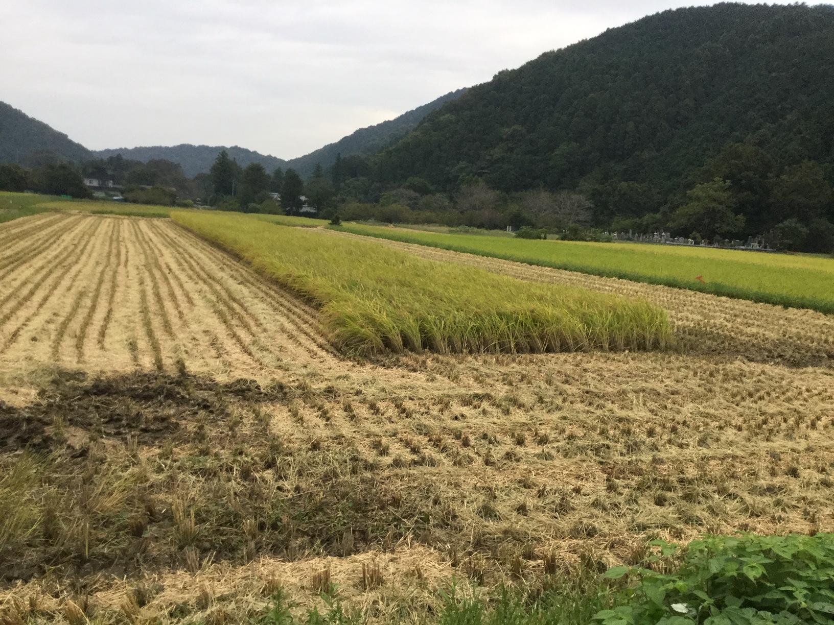 稲刈り体験を待つ圃場20190930