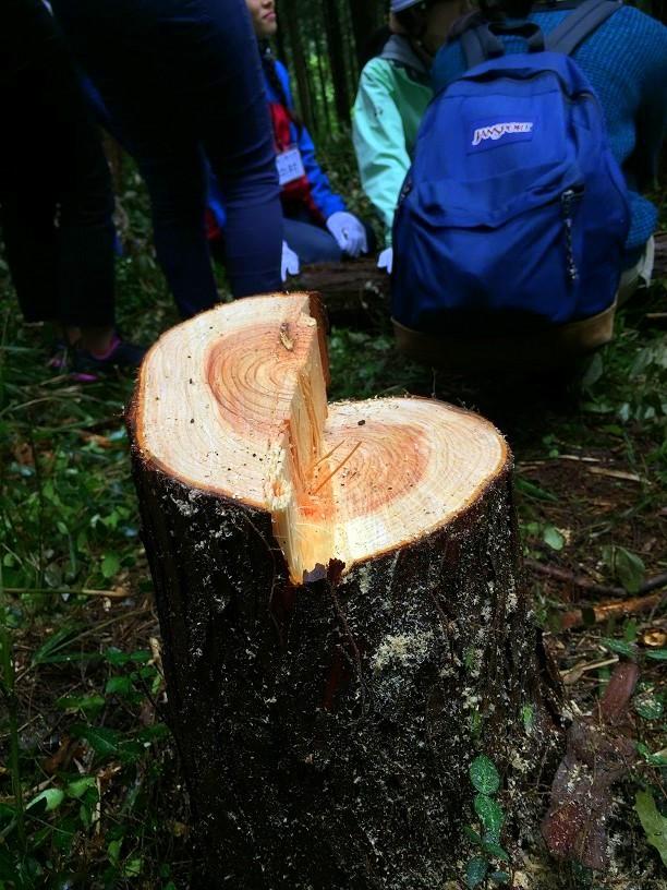 真っ直ぐ、立派な木を育てよう~間伐体験~