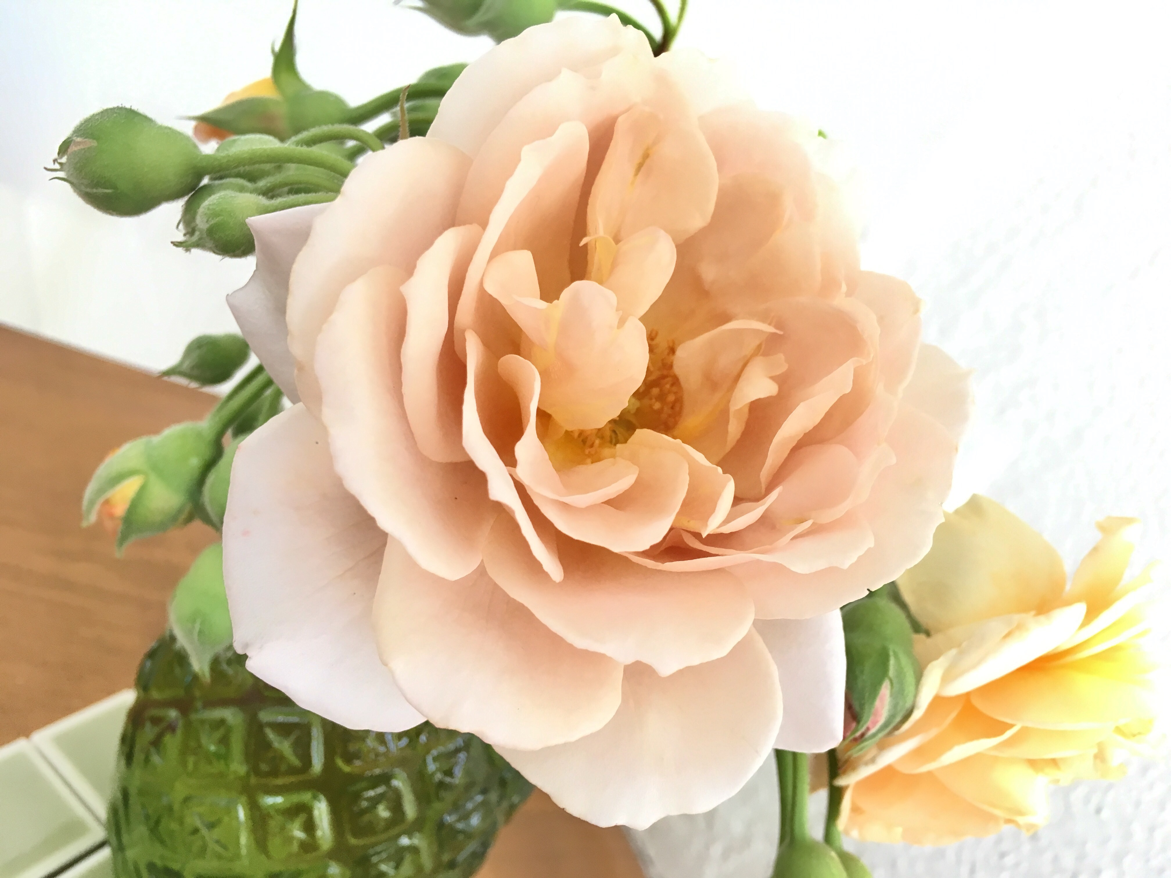 <スタジオグリーン>「綺麗な薔薇には棘がある」バラにはご注意を…