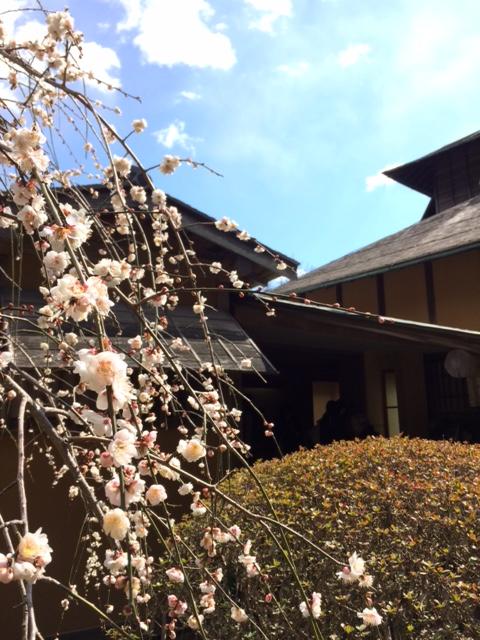❁梅の花が満開~水戸 偕楽園~