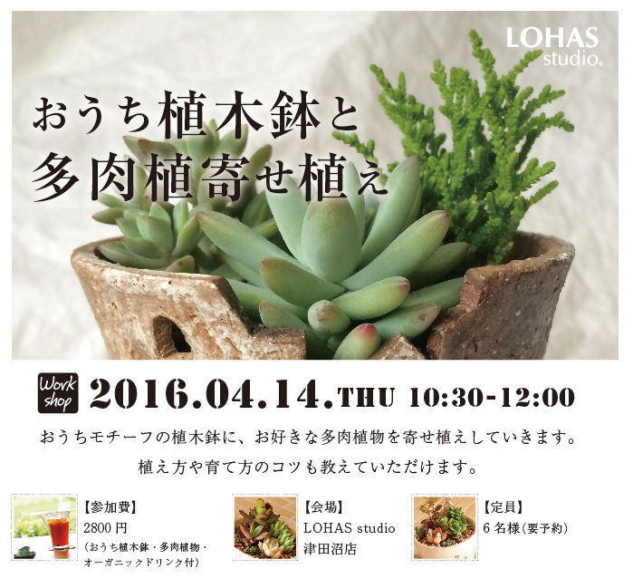 【船橋】☆おうち植木鉢と多肉植物寄せ植え(ワークショップ)