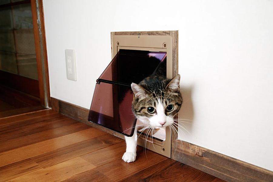 猫専用のドア